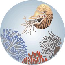 Моллюск (трафарет для росписи)
