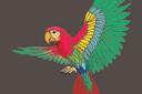 Летящий попугай (трафарет, малая картинка)