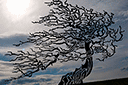 Трафарет Осеннее дерево на ветру
